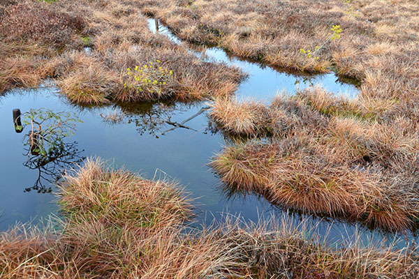 Moorlandschaft mit Grasbüscheln und Wasser