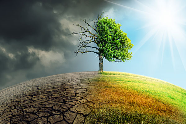 Links verdorrte Erde und kahler Baum, rechts saftige Wiese und Baumhälfte voller Laub